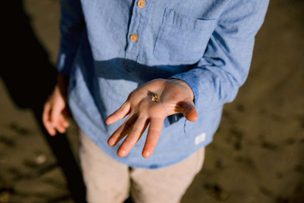 The young boy finds a small crab and holds it in his open hand in the sunlight on the beach at Magnetic Island.