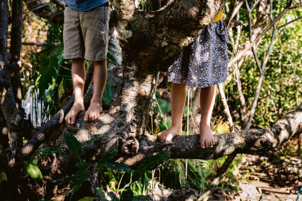 A young boy and girl are adventuring in a tree at the beach house at Magnetic Island.
